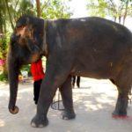 Животные острова Хоа Лан. Нячанг, острова залива Ня Фу