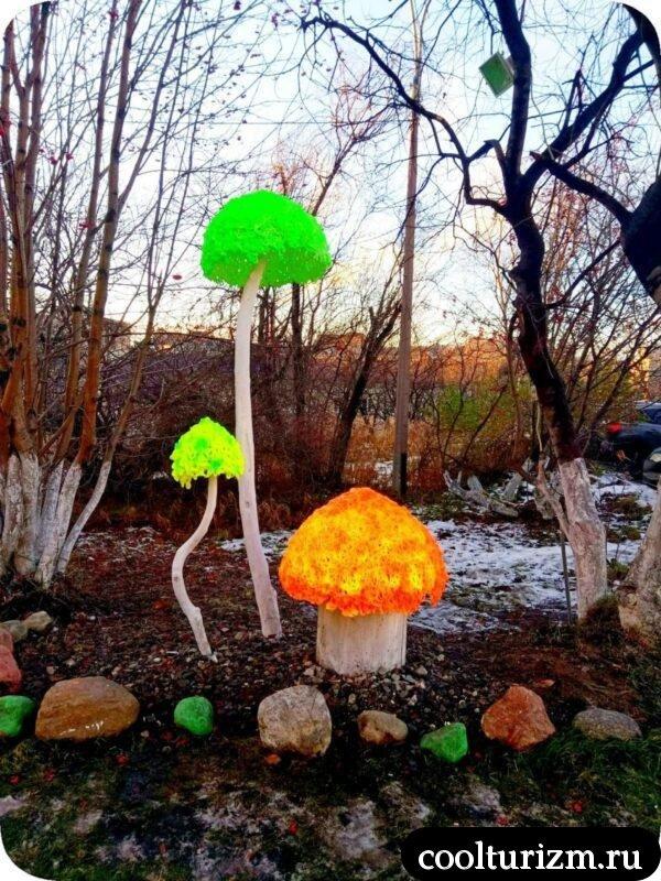 Кислотные грибы Мурманск Книповича