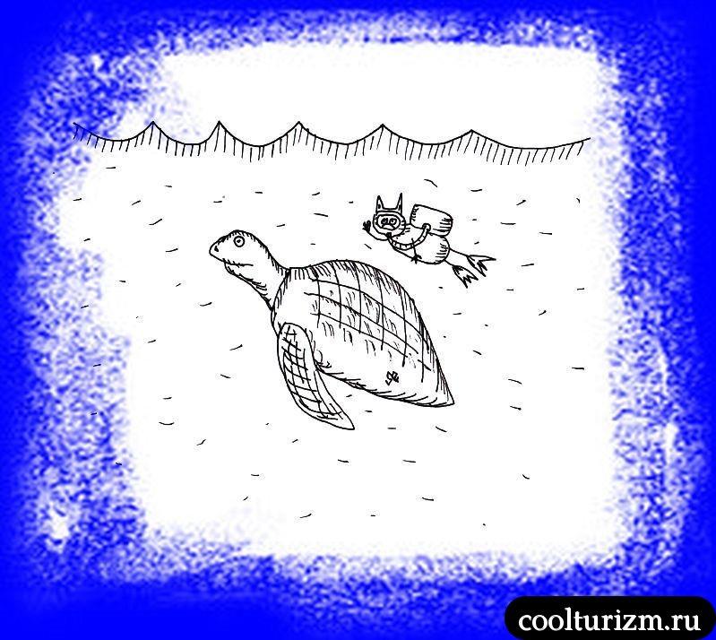 морская черепашка по имени