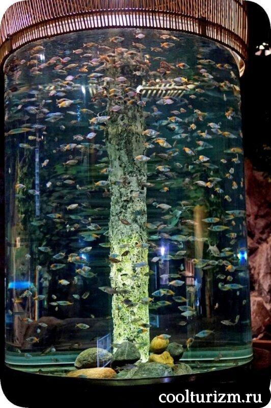 Океанариум в Санкт-Петербурге рыба в банке