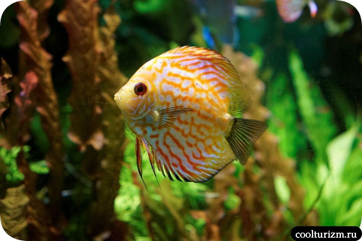 Санкт-Петербургский океанариум экзотические рыбки