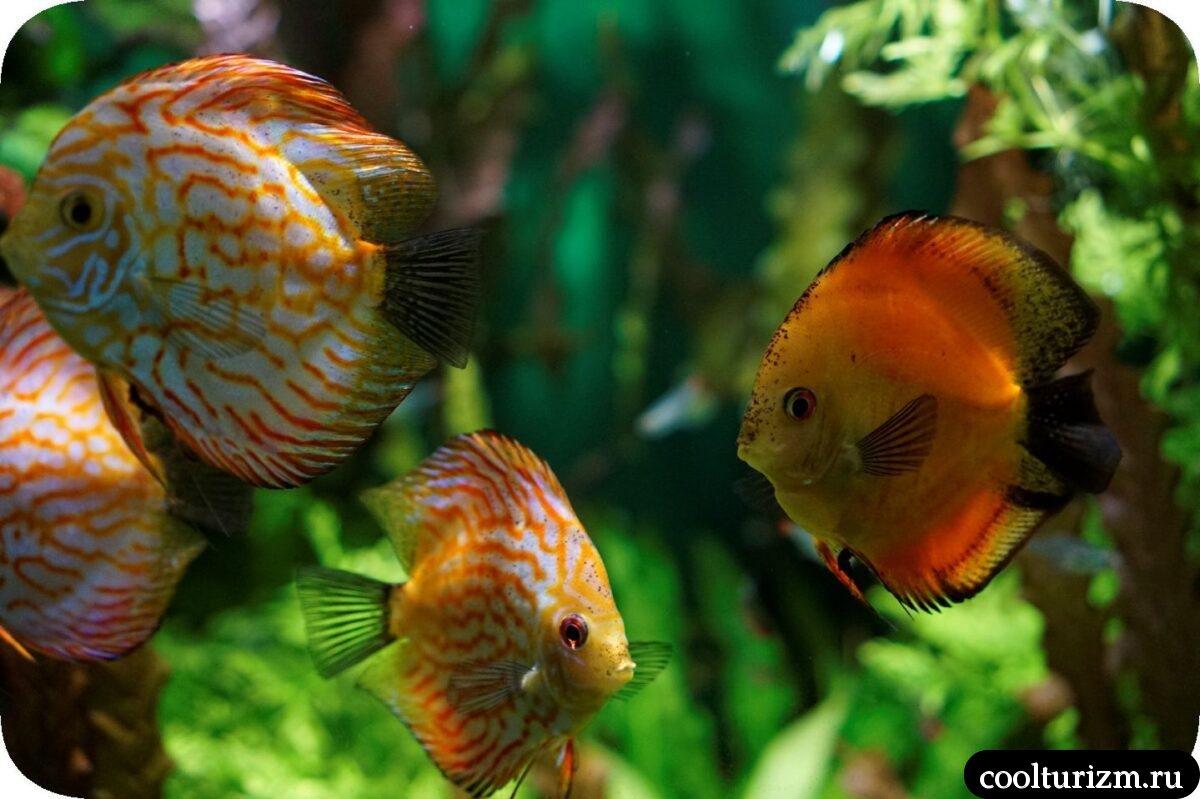 Санкт-Петербургский океанариум красивые рыбки