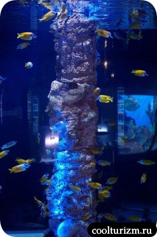 Санкт-Петербургский океанариум