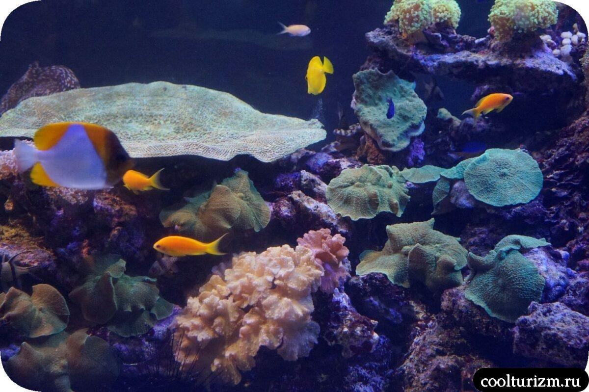 Санкт-Петербургский океанариум подводный мир