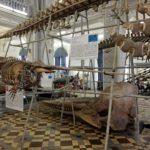 Зоологический музей РАН в Санкт-Петербурге