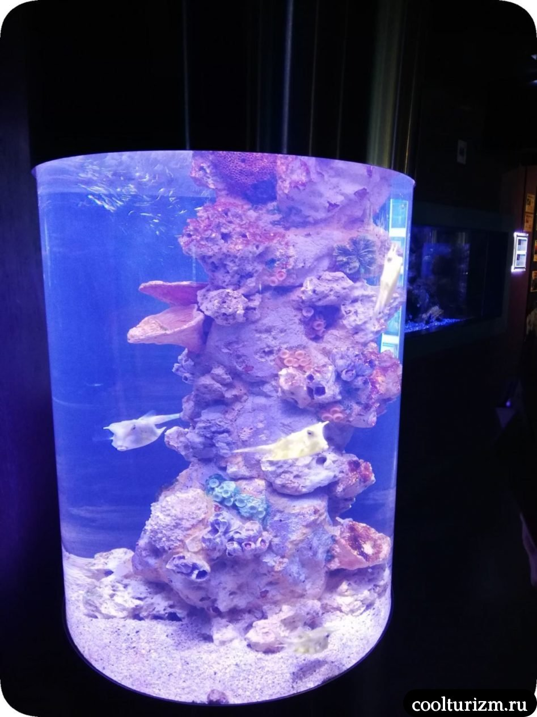 Санкт-Петербургский океанариум фотографии рыб