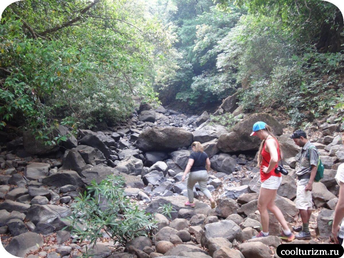поход к водопаду эко коттеджи Wildernest & Swapnagandha Nature Resort