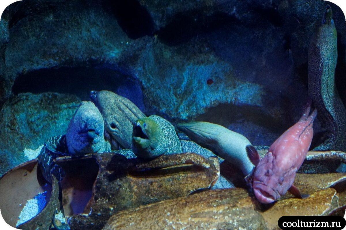 мурены океанариум Спб