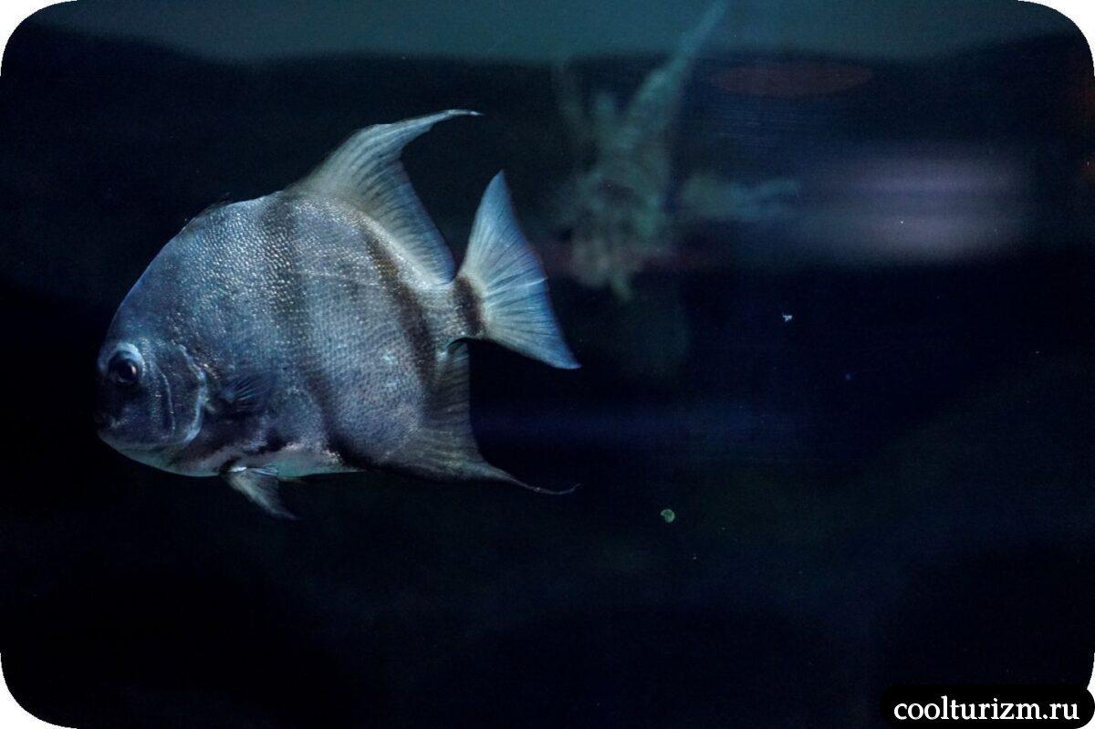 океанариум фото рыбы