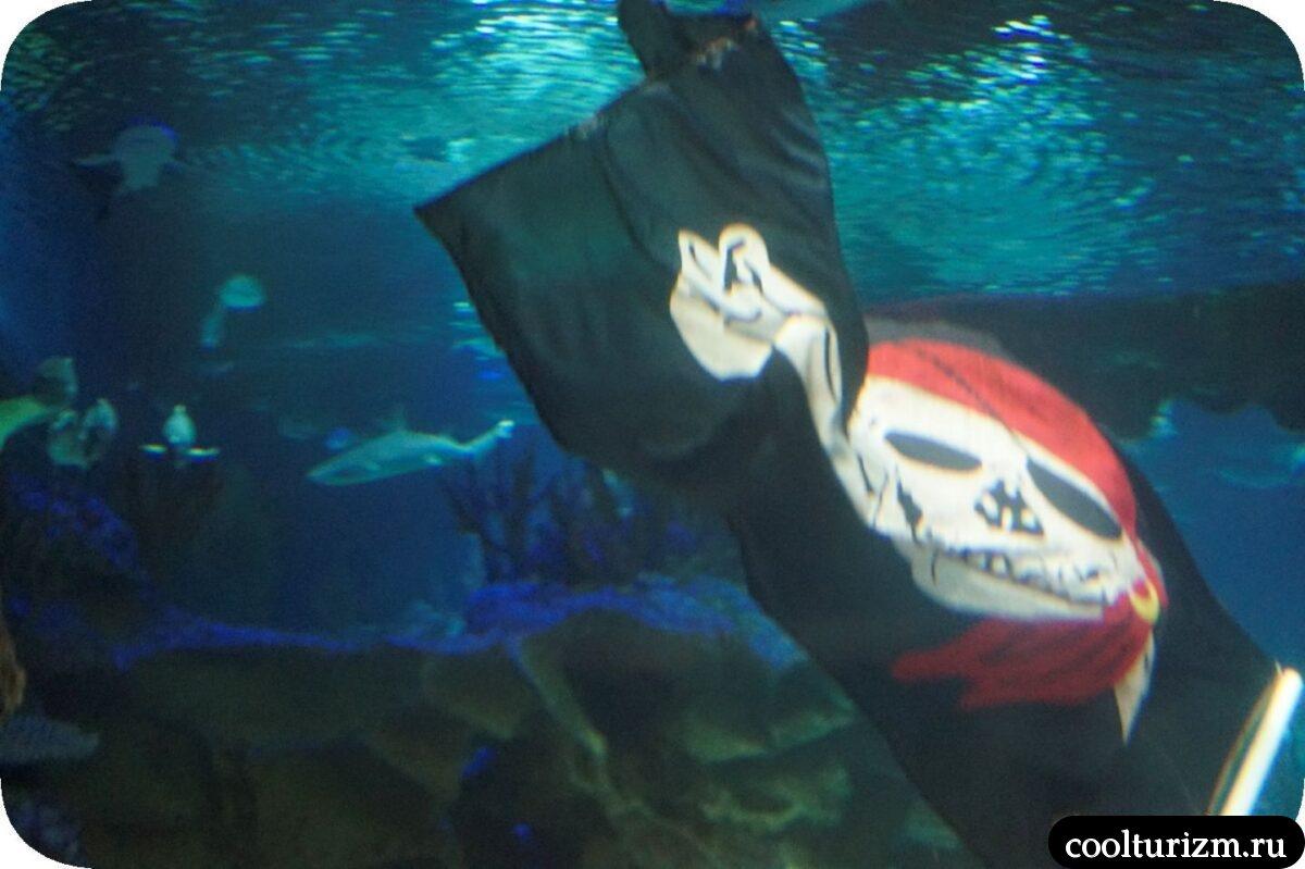 океанариум Спб главный аквариум шоу