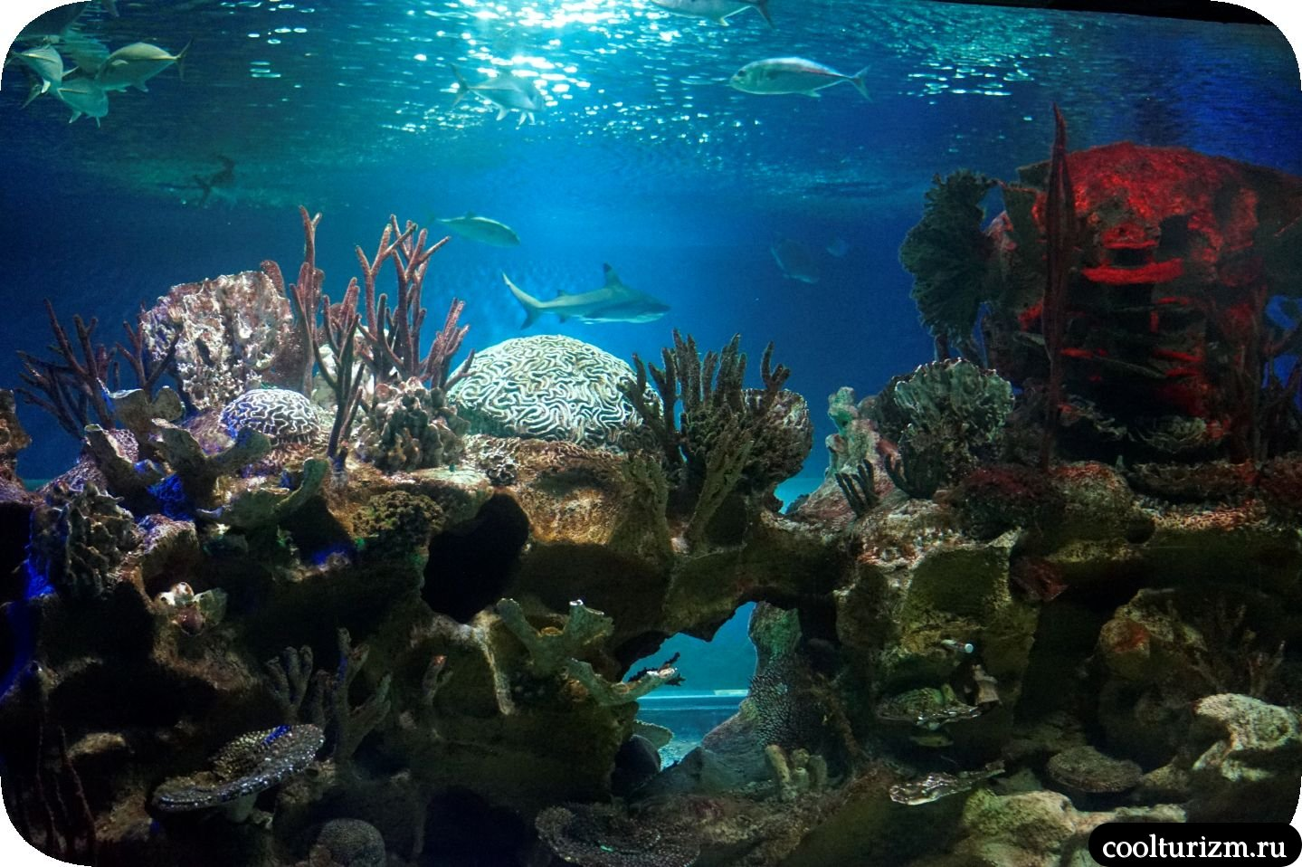 главный аквариум Спб