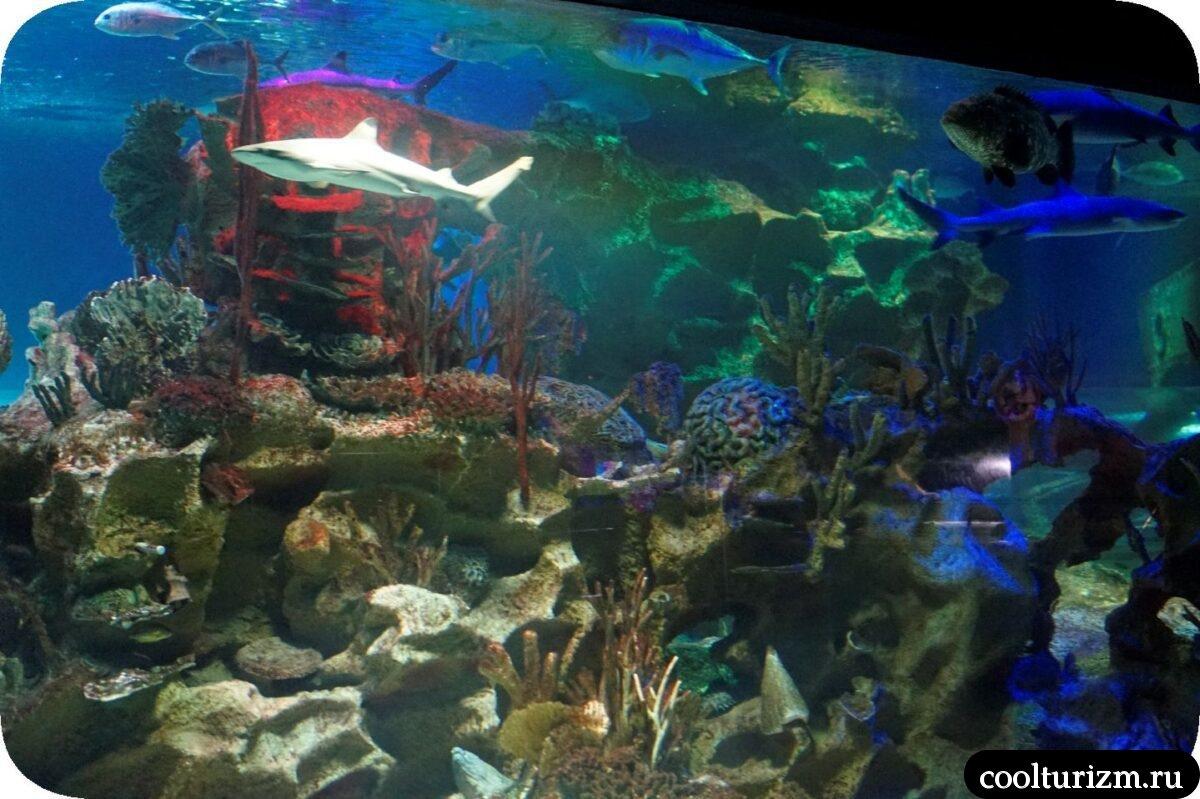Кормление акул и скатов главное шоу в Океанариуме в Санкт-Петербурге главный аквариум