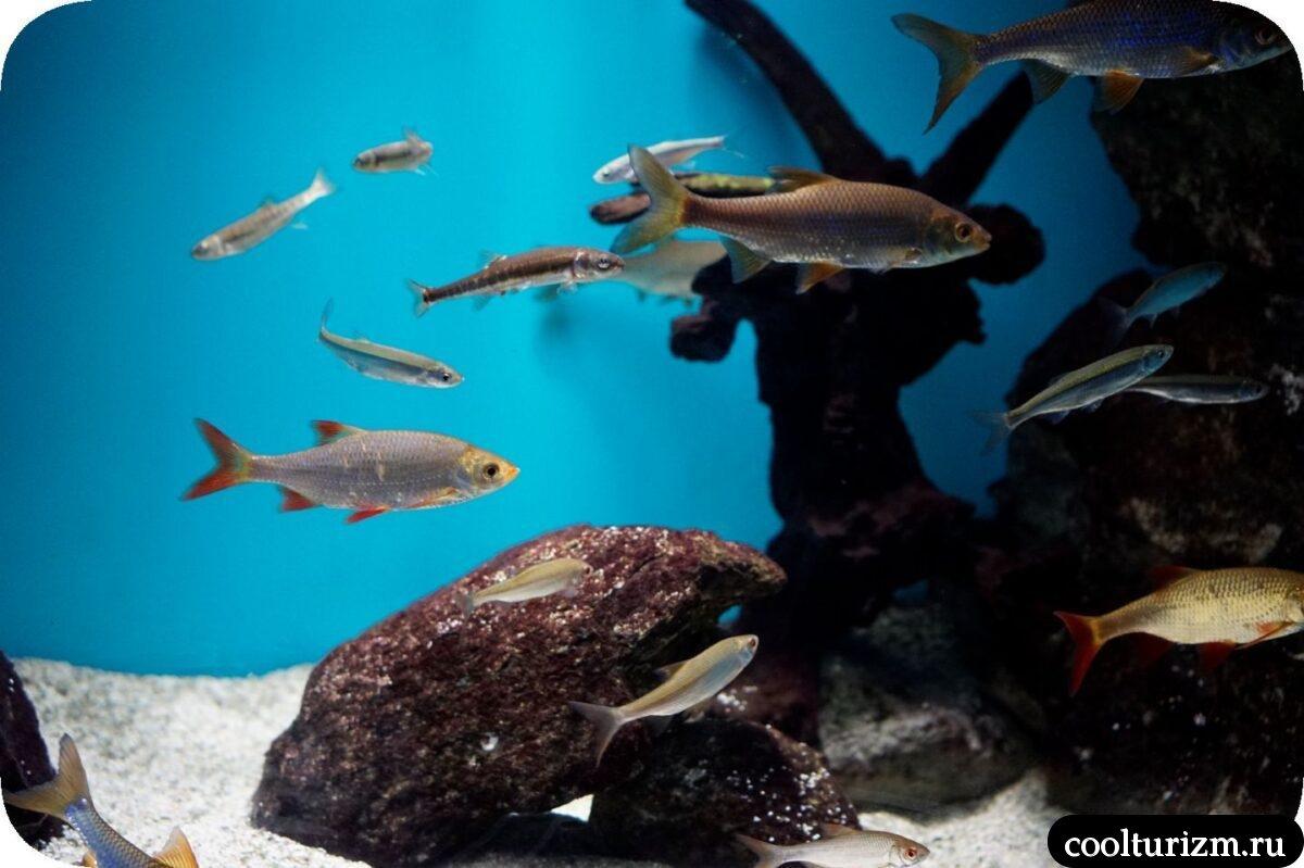 рыба океанариум в Спб