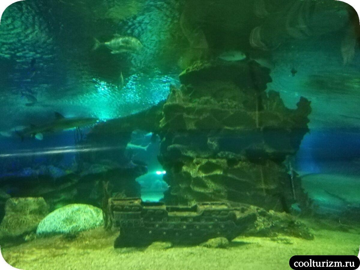 движущаяся дороже тоннель главный аквариус Спб