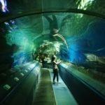 Кормление акул и скатов главное шоу в Океанариуме в Санкт-Петербурге