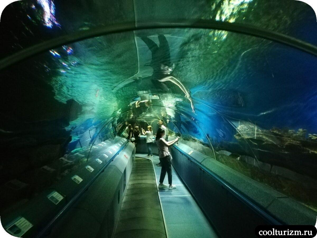 тоннель под главным аквариумом Спб океанариум