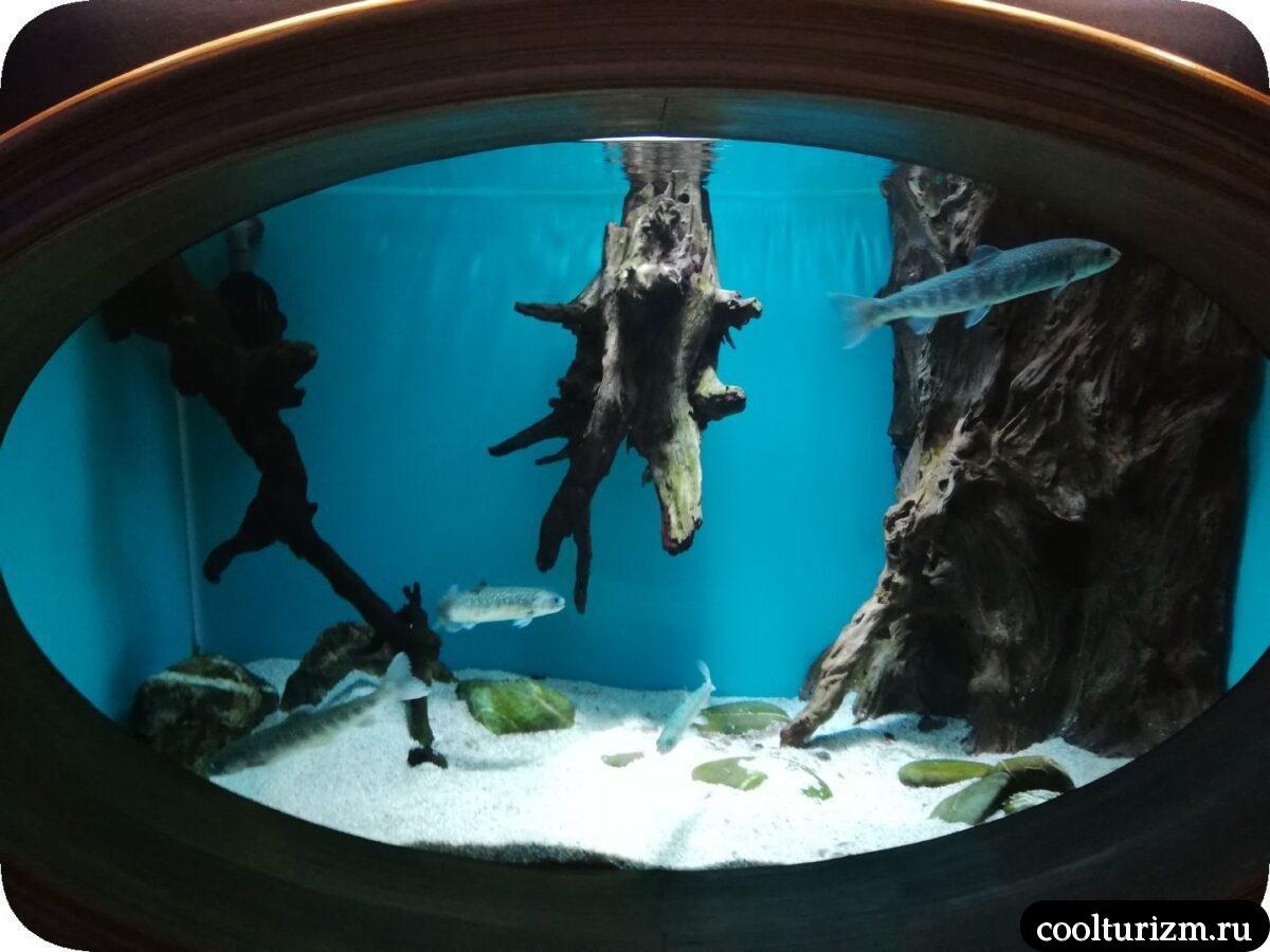 рыба северо-запада Океанариум Спб