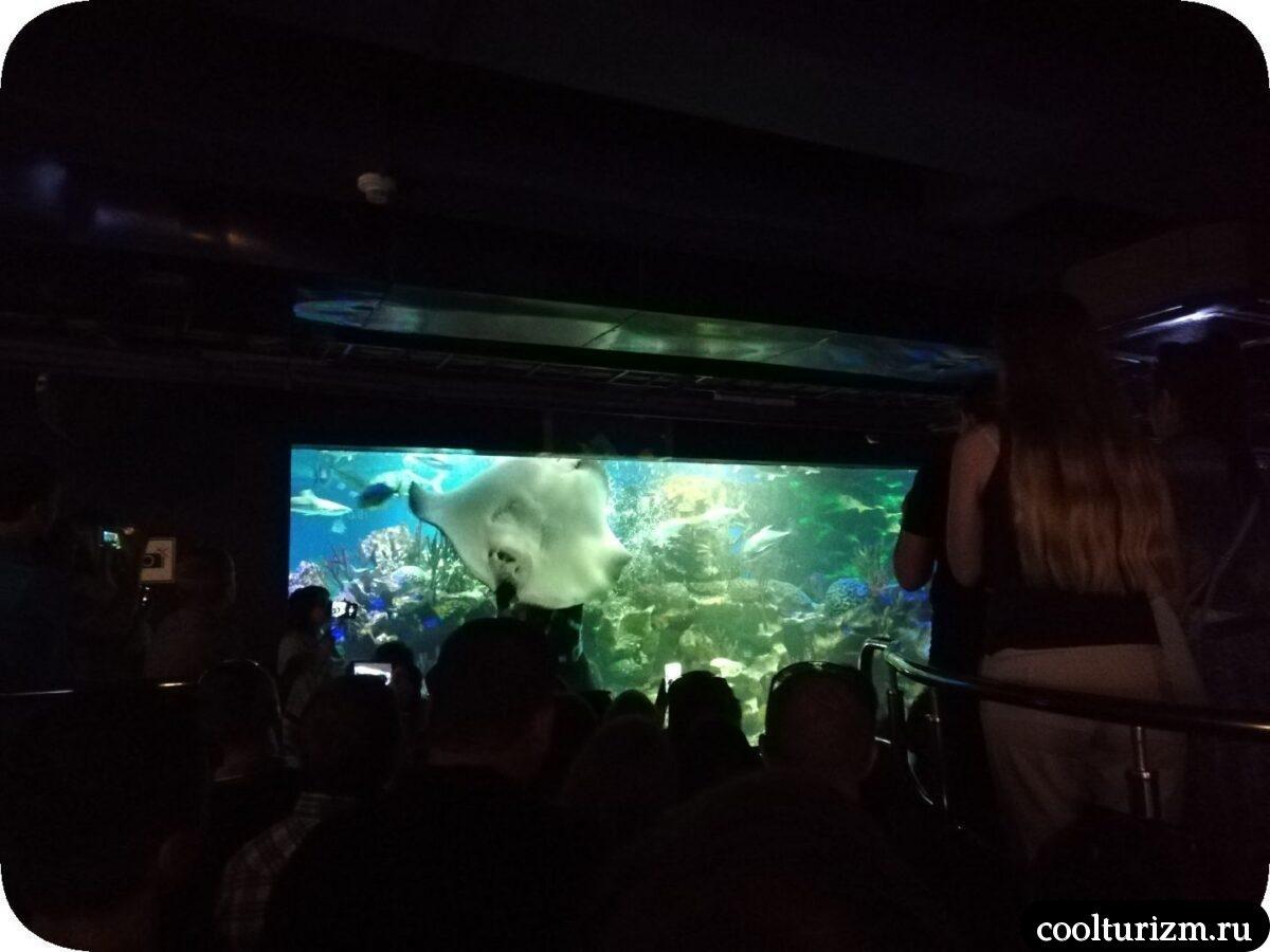 кормление манты океанариум Спб