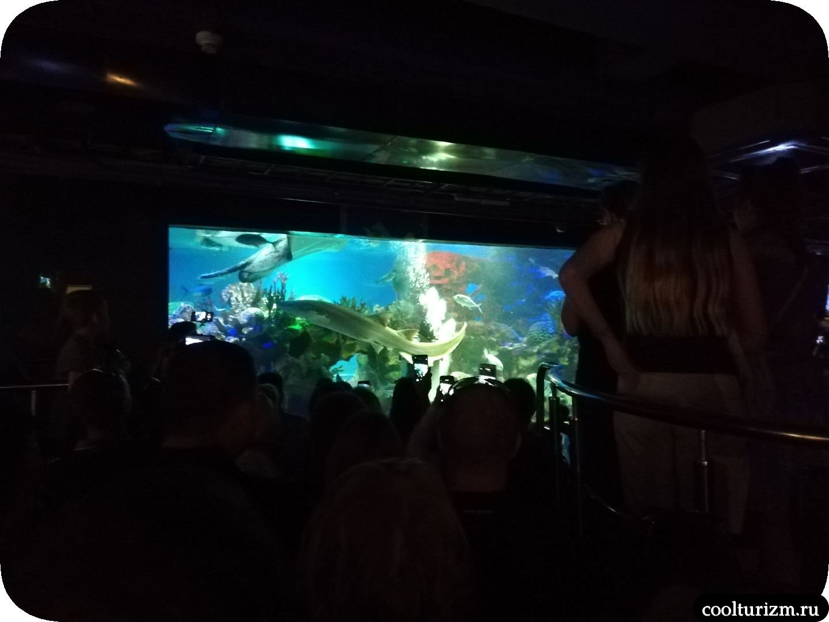 Кормление акул и скатов главное шоу в Океанариуме