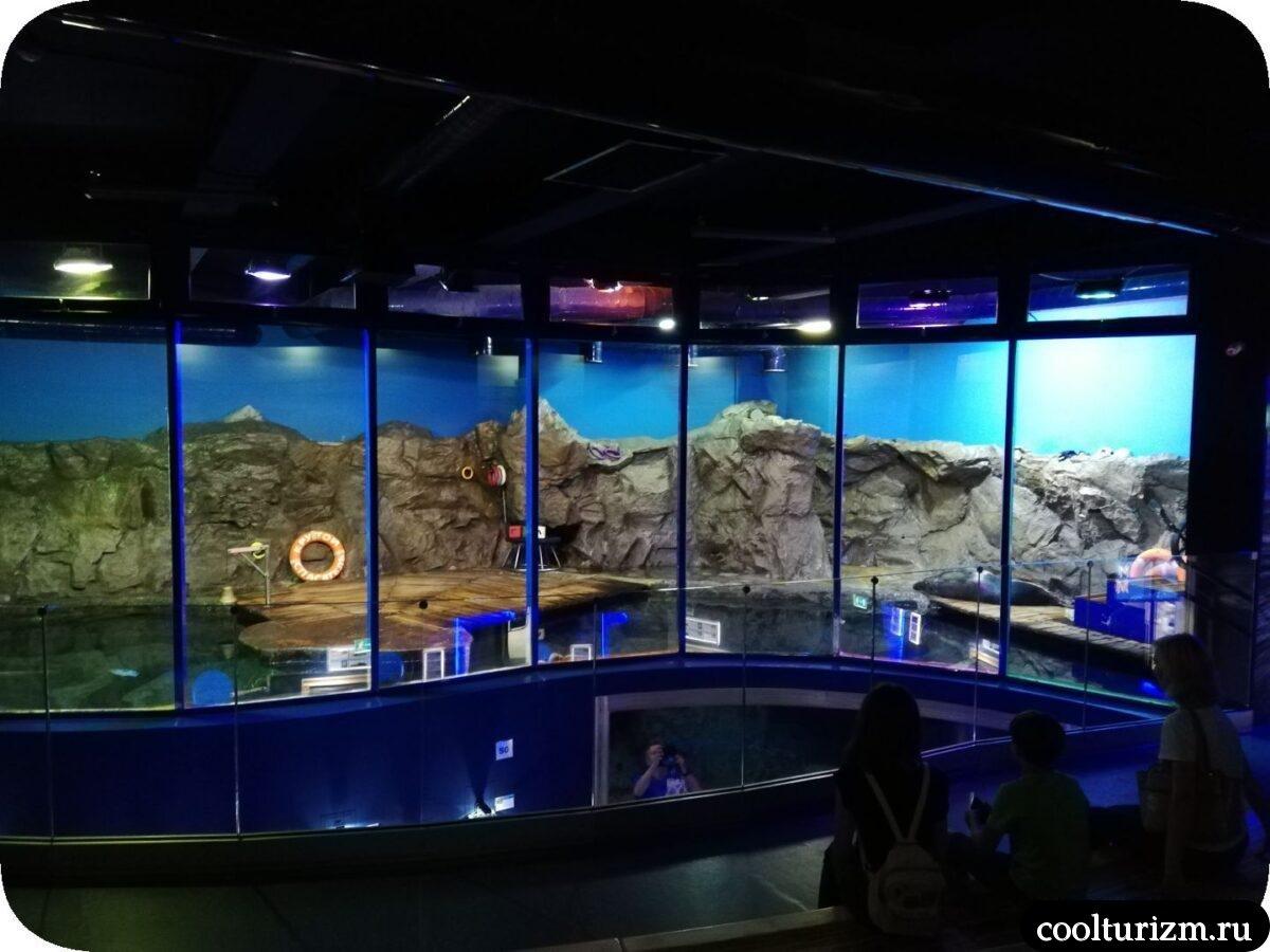 шоу тюленей Спб океанариум
