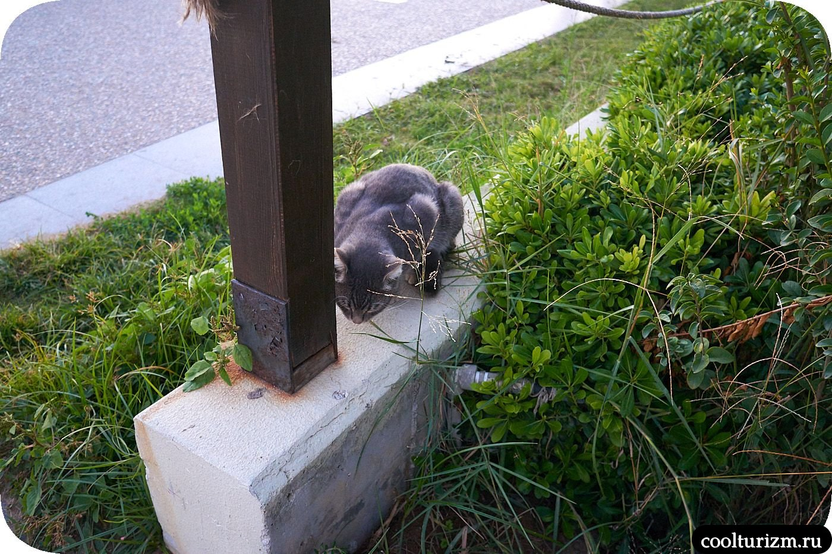 Котики в Сиде Турция