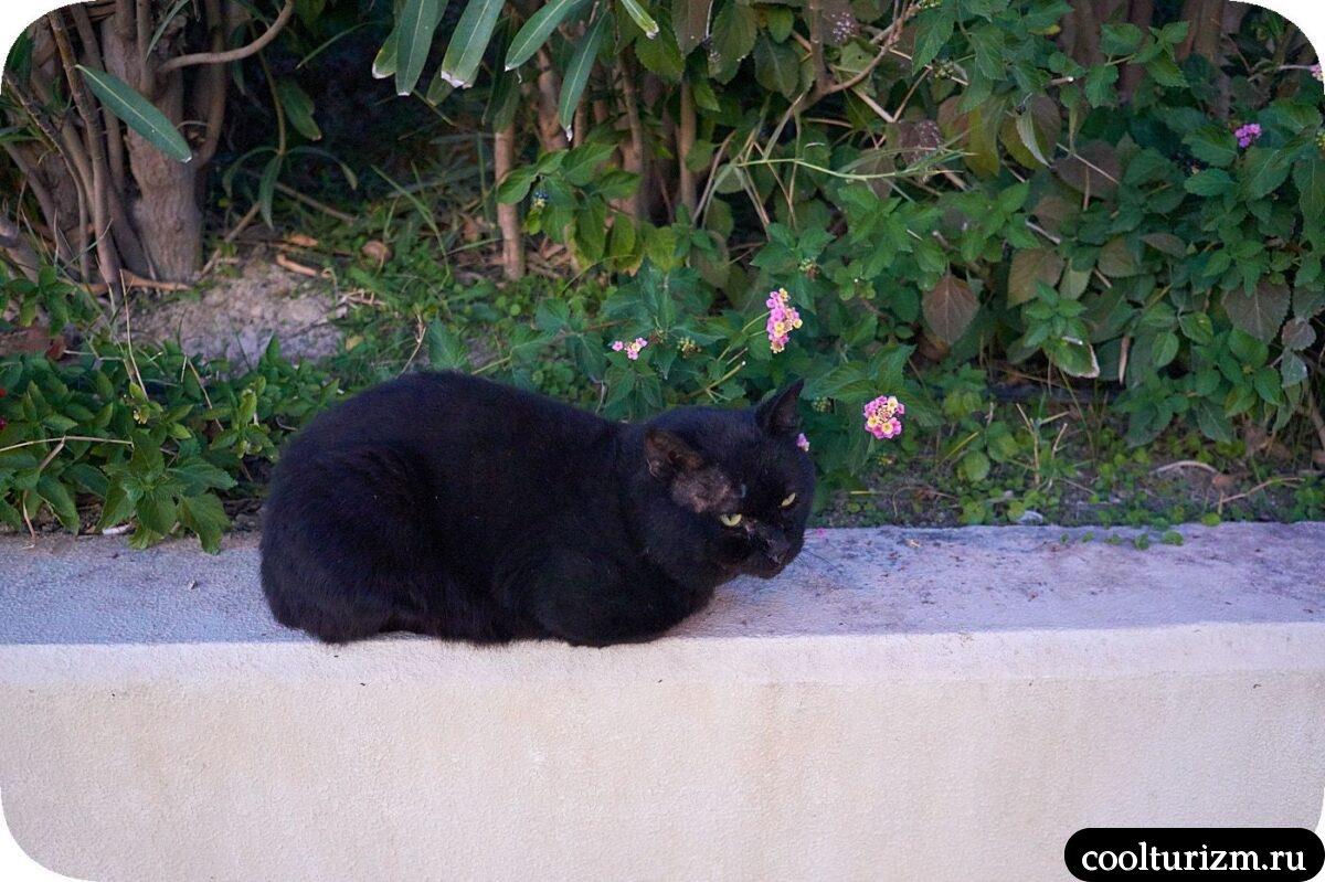 Кот в Сиде