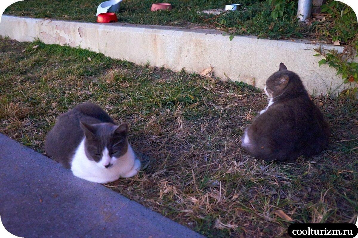 Котики Сиде