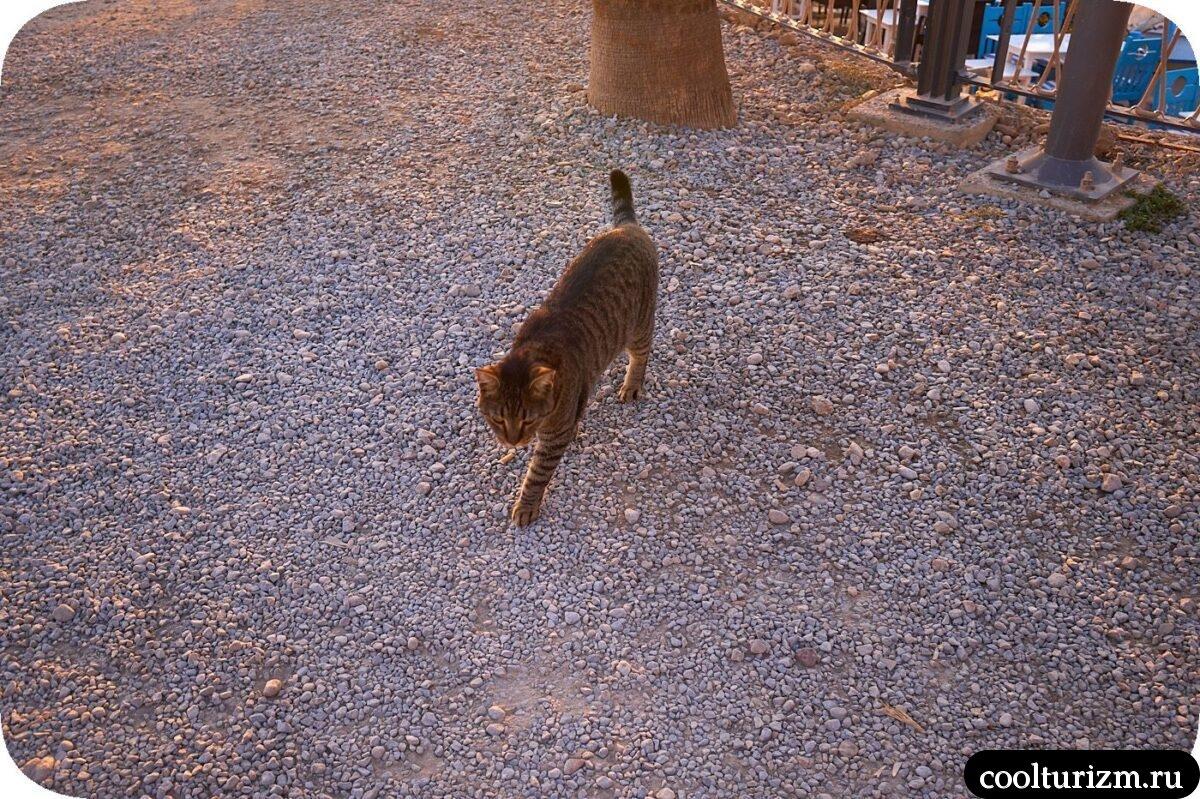 Котики в Сиде