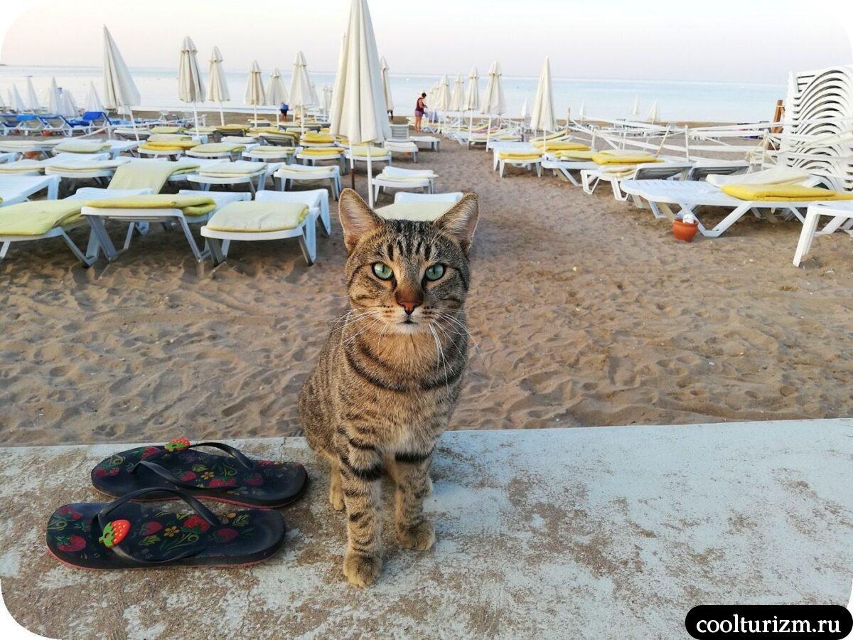 Турция Сиде ноябрь котики пляж