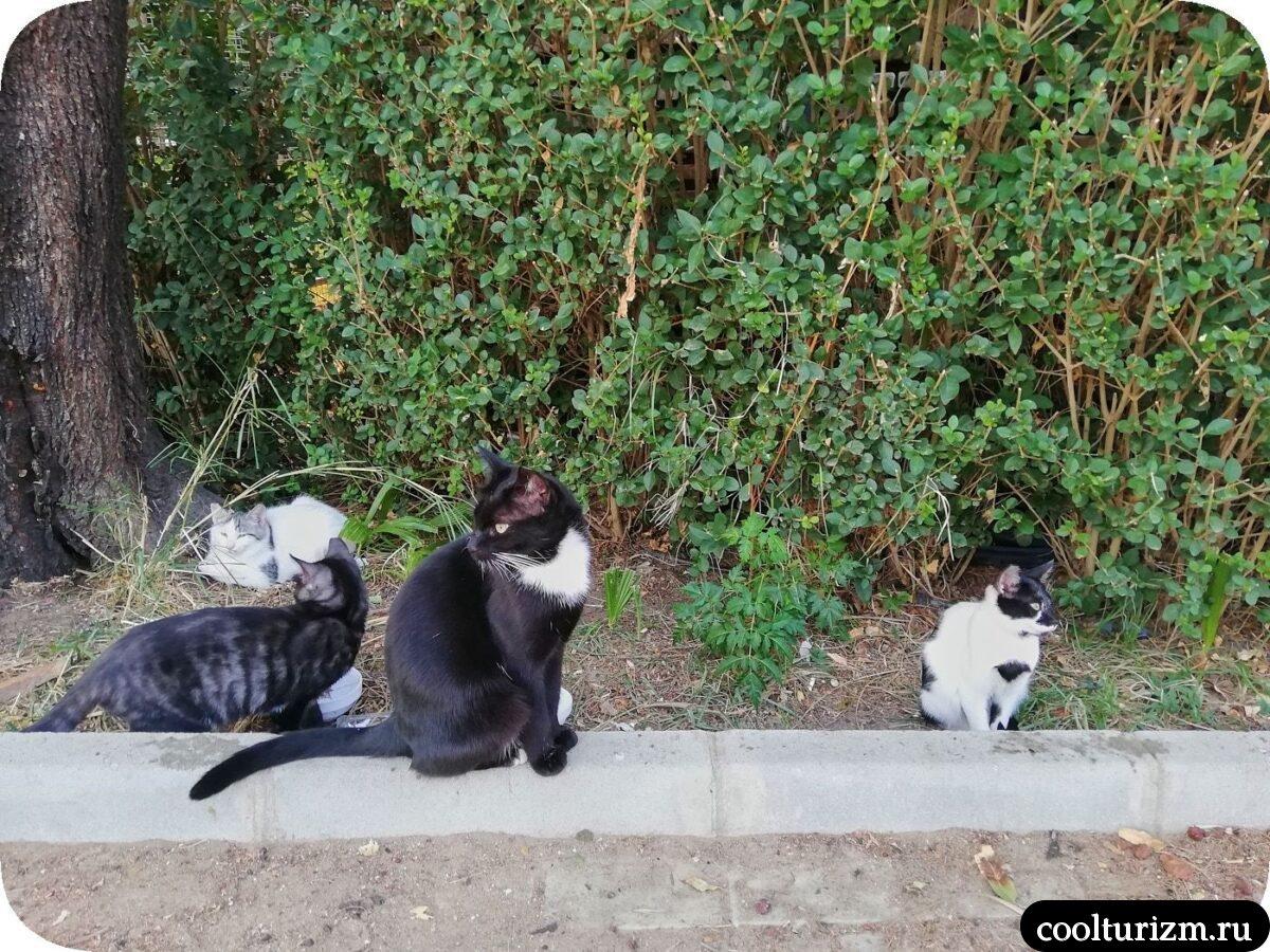 Турция Сиде ноябрь котики