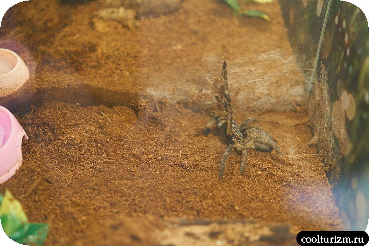 Выставка пауков гигантов Мурманск
