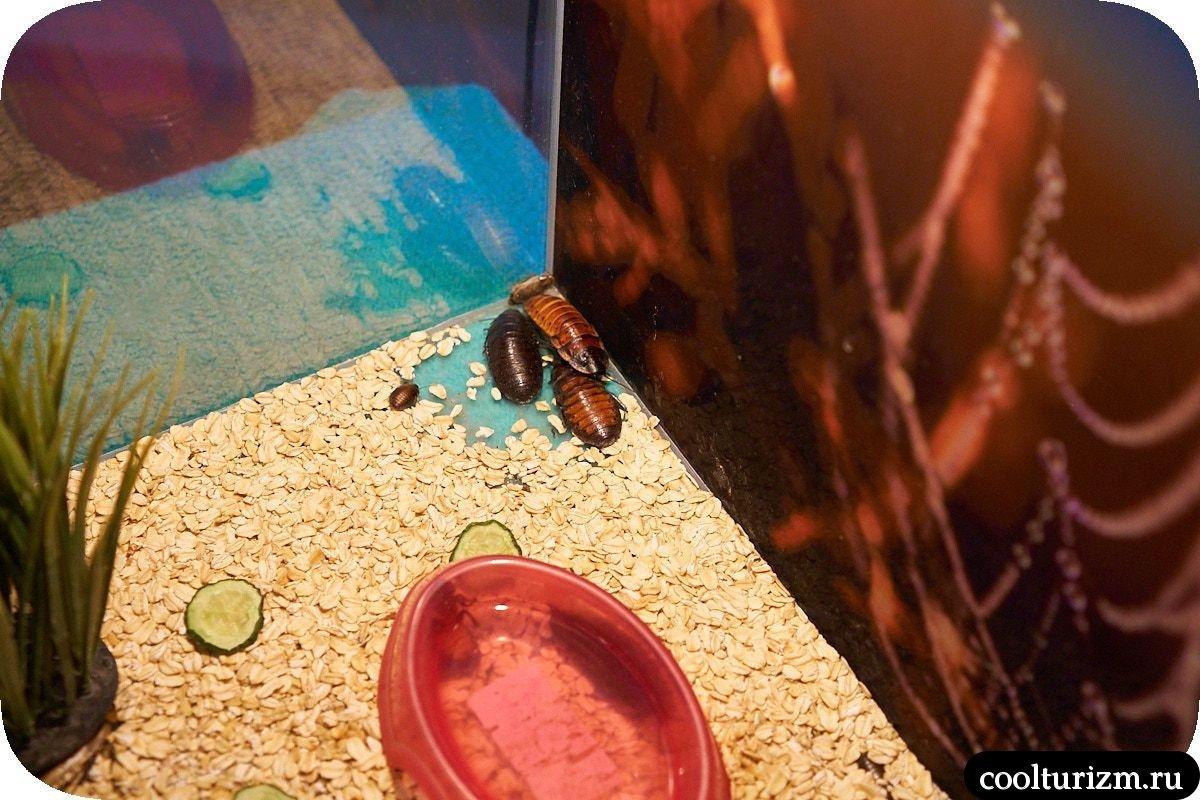 Выставка пауков Мурманск мадагаскарские тараканы