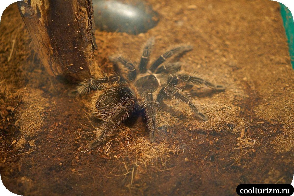 Выставка ядовитых пауков Мурманск