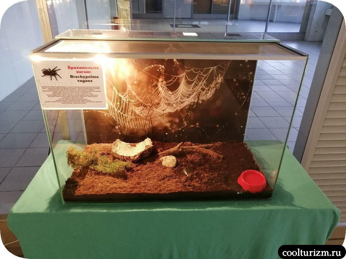 Выставка лохматых пауков Мурманск
