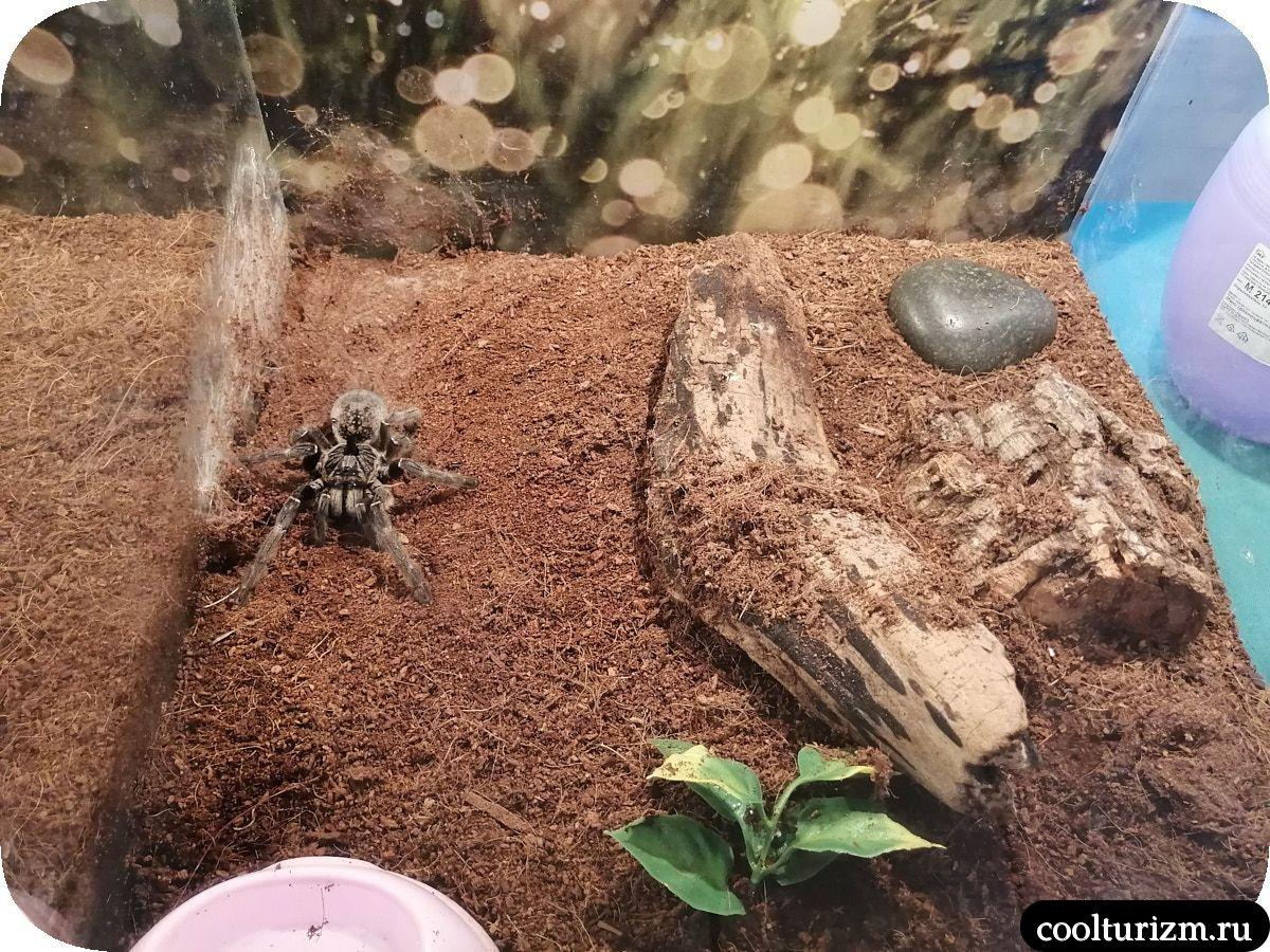 Выставка пауков Мурманск