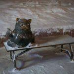Кот Семен Мурманск