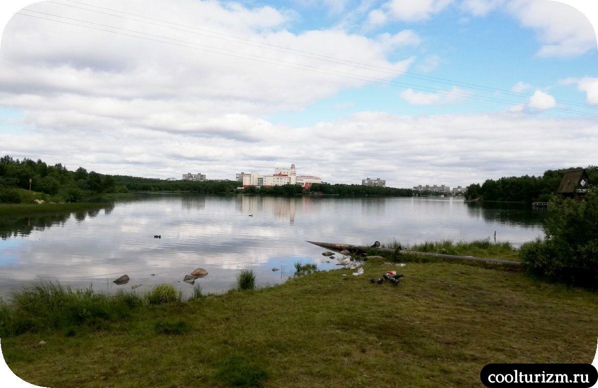Чайки в Мурманске на Семеновском озере