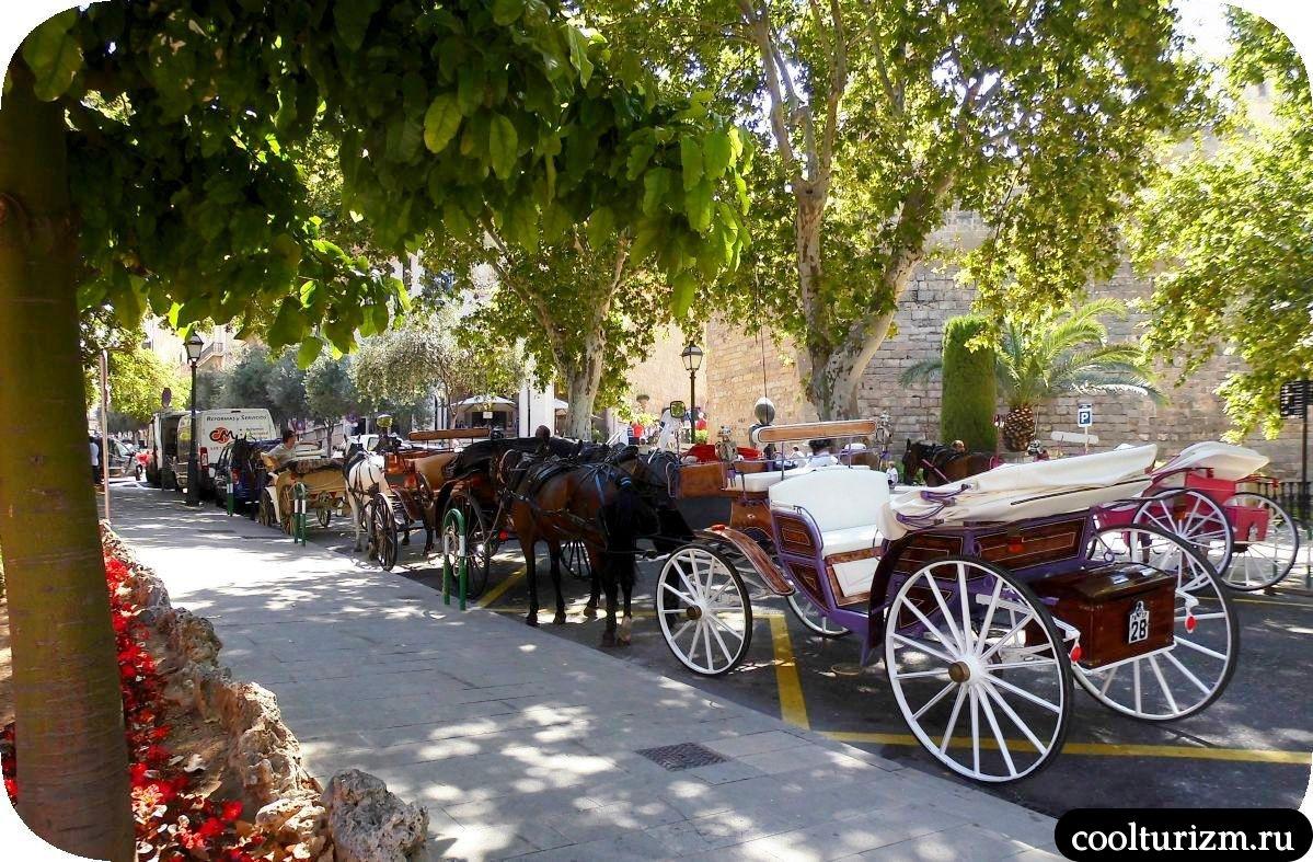 лошадки Борн Пальма де Майорка