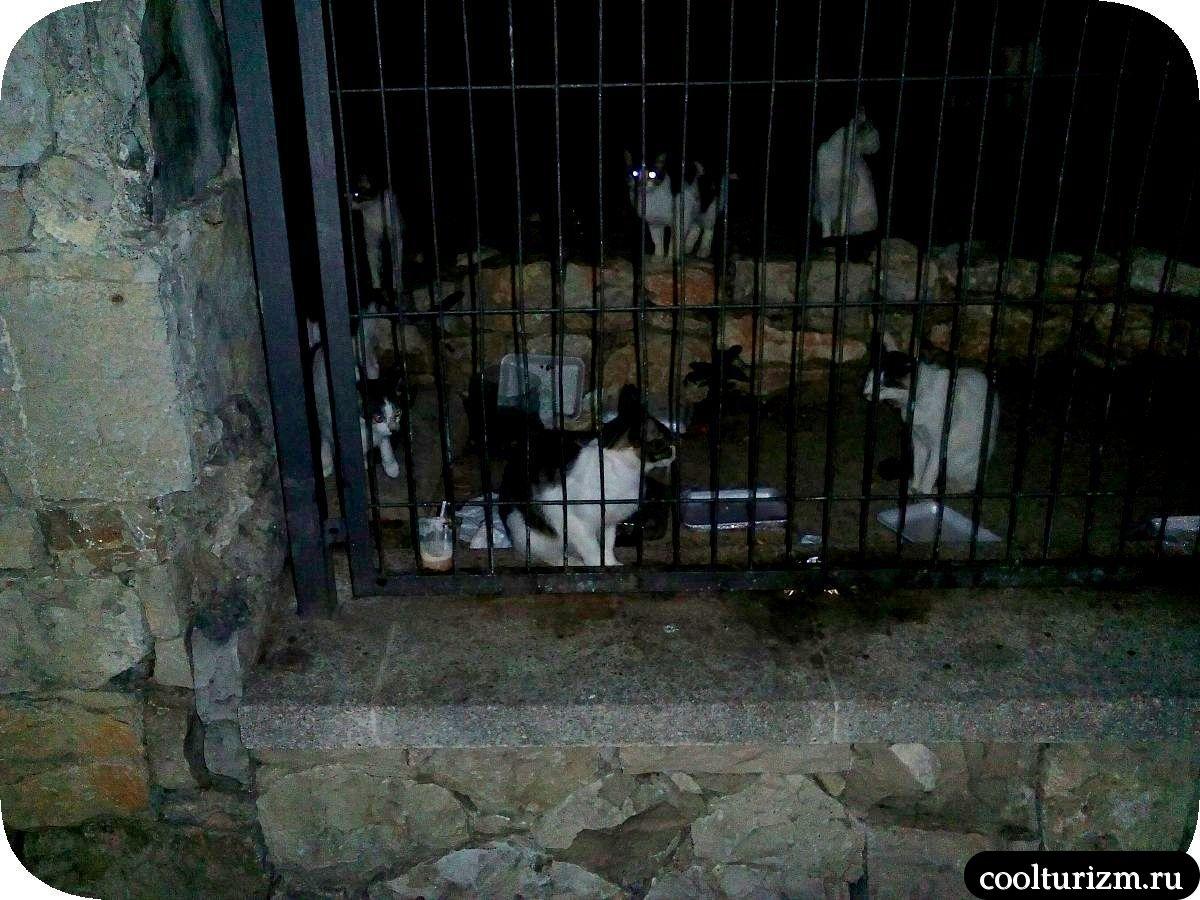 Улицы Салоу Испания коты