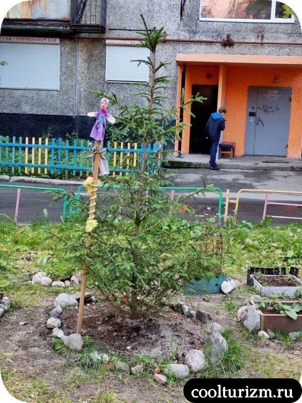 Плюшевый ад мурманских дворов летом зеленая елка